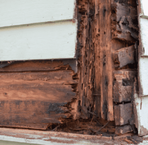 Termite destroys the wood